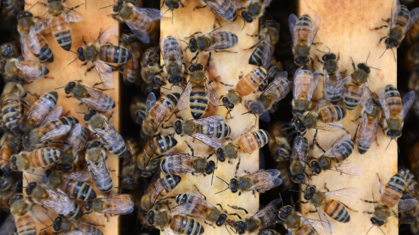 Tiny bees found in woman's eye, feeding off tears