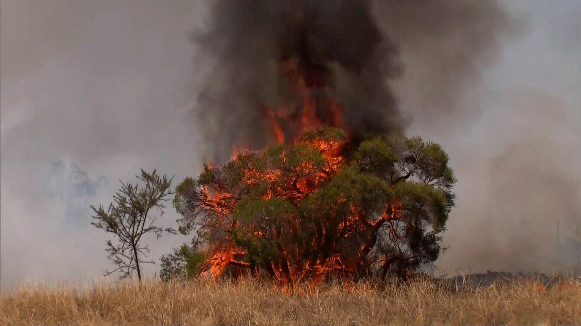 bushfires nsw - photo #36