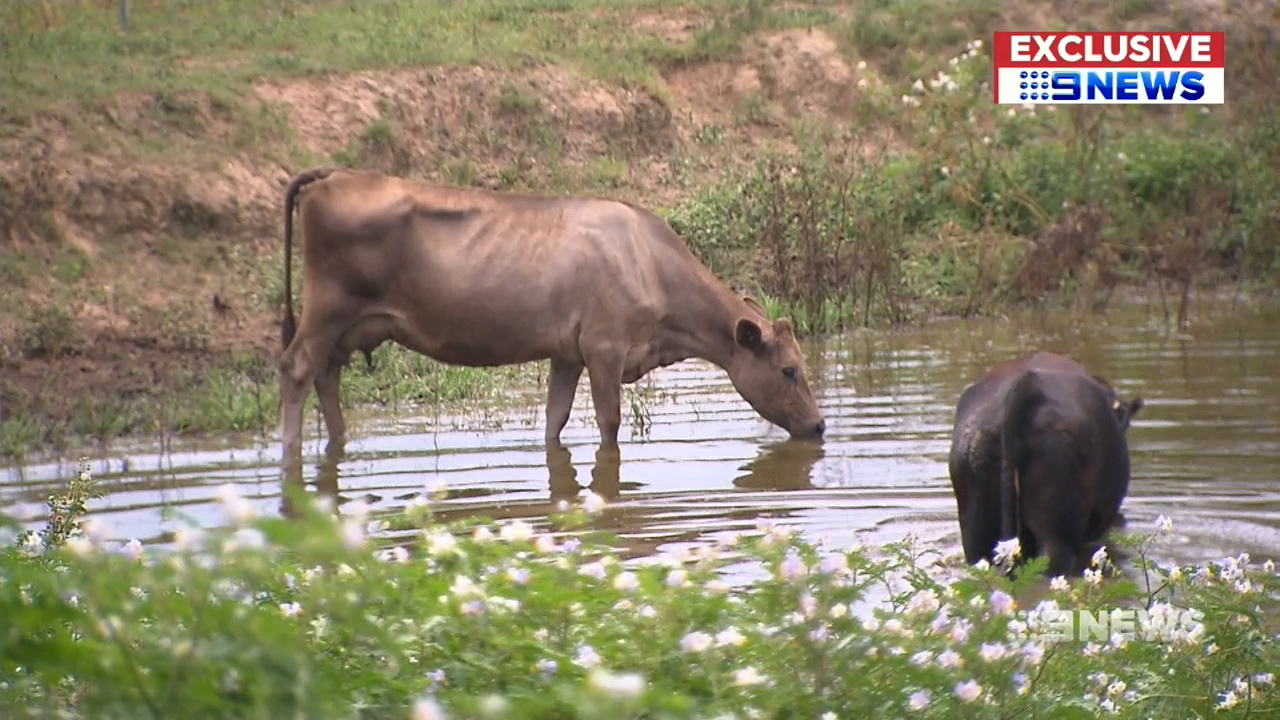 'It's really heartbreaking': Farming family devastated by toxic beef