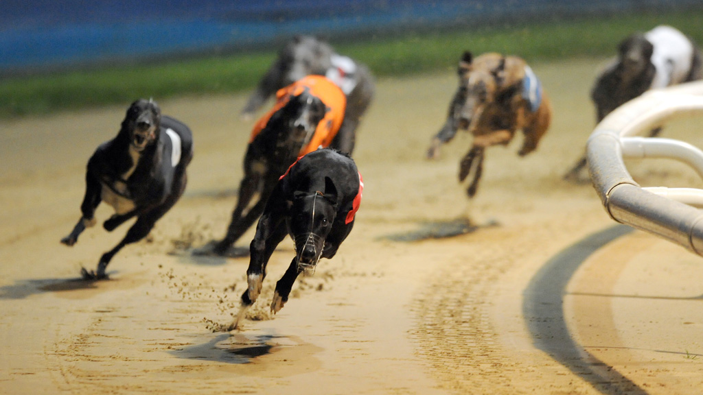 Greyhounds NSW charge 179 people over alleged dog exports to Macau
