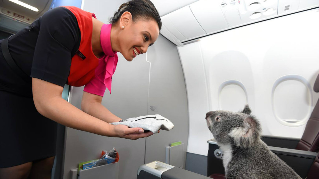 """Do you have any more of the leaves?"" This little fellow was baffled by the offer of a hot towel. (Qantas Facebook)"