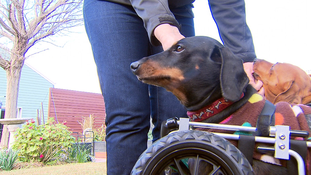 'They see me rolling...' (9NEWS)