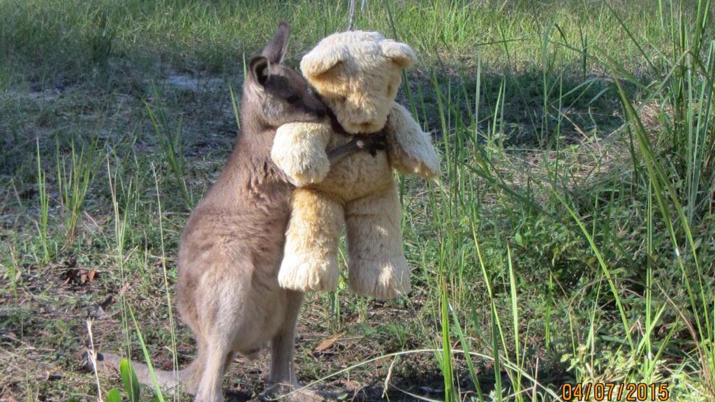 Viral image proves even wallabies need hugs