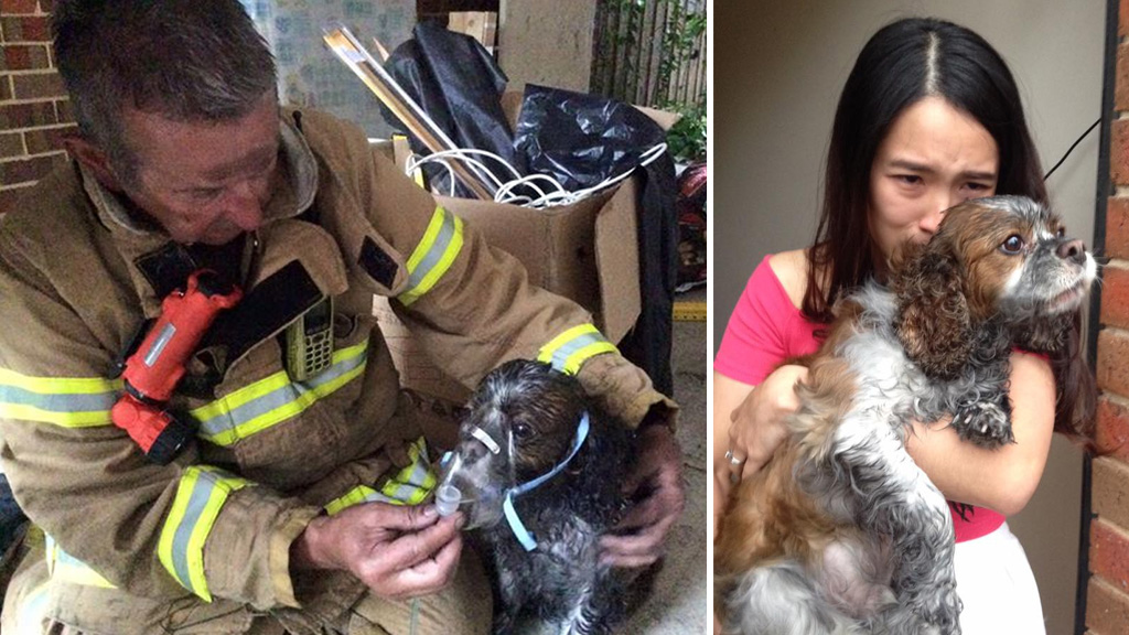 Puppy rescued from Melbourne house fire 'lucky to be alive'