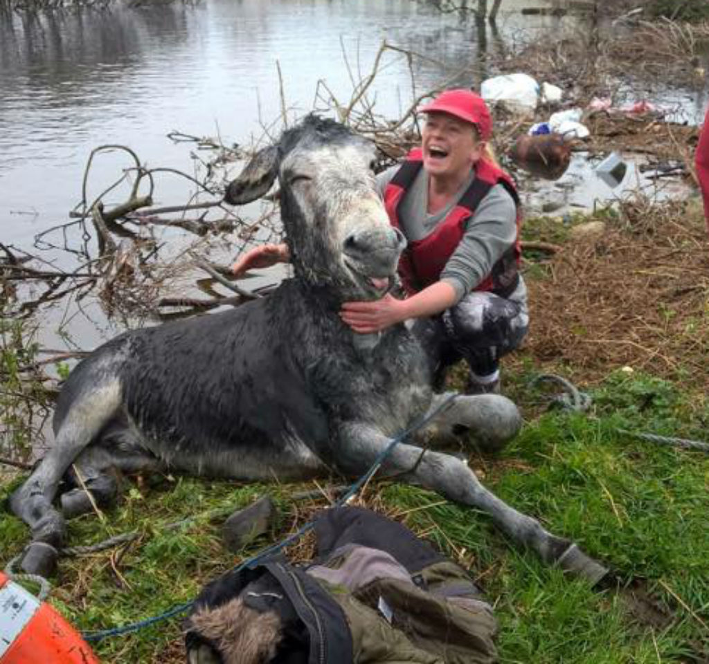 Donkey flashes grateful grin after being rescued from floodwaters