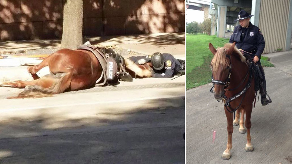 Officer's final moments with fallen police horse captured in emotional photo