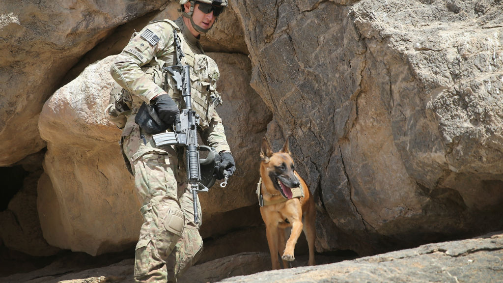US war dogs now guaranteed safe return home after serving