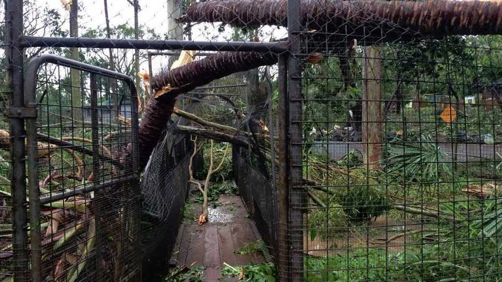A crocodile enclosure has been severely damaged at Cooberrie Park Wildlife Sanctuary at Yeppoon. It is not believed any crocodiles escaped. (9NEWS)
