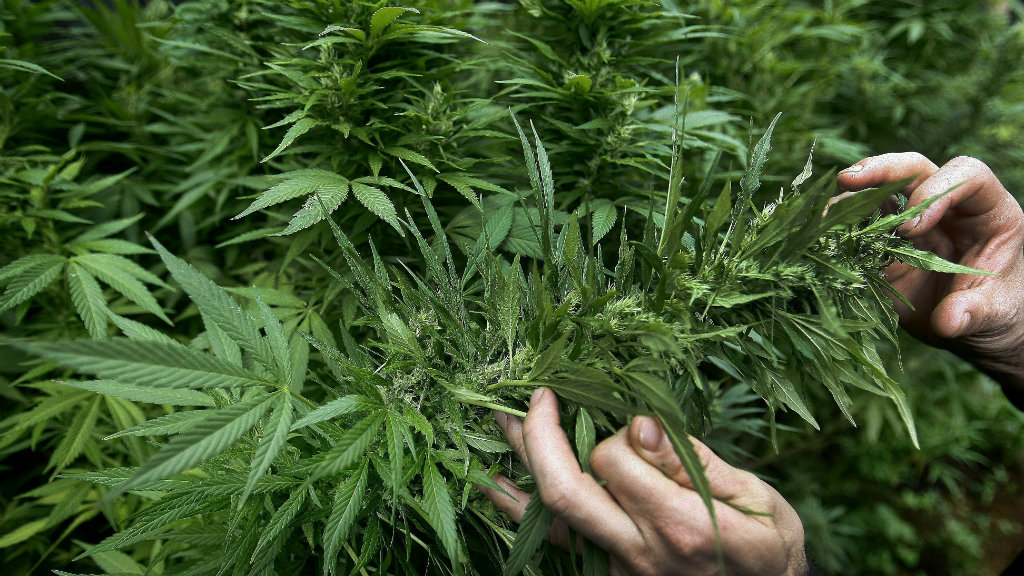 NSW government pledges $9 million in budget for medical cannabis trials