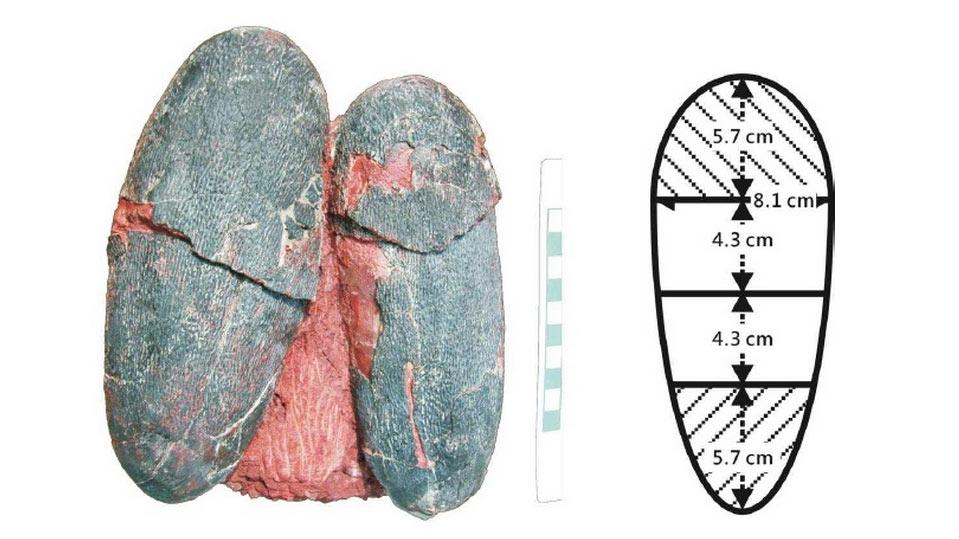 Scientists unveil the true colour of dinosaur eggs