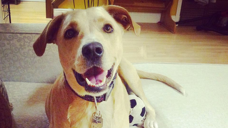 'World's saddest dog' now 'world's happiest dog' after finding new home