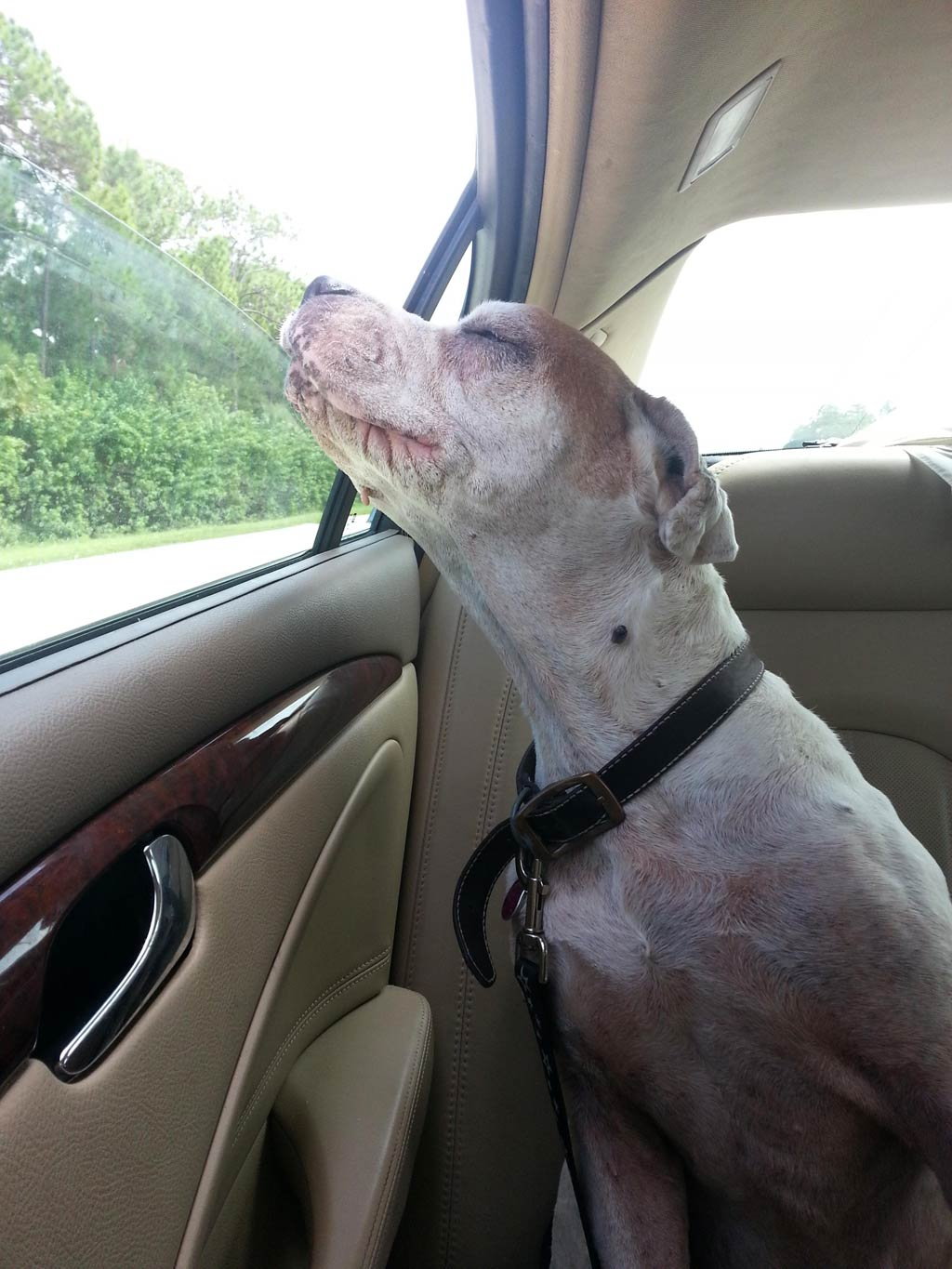 Elderly dog's 'last ride' captured in heart-wrenching photo