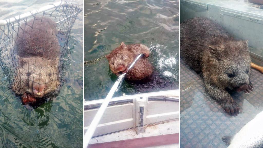 Tasmanian fishermen make catch of the century with record wombat haul