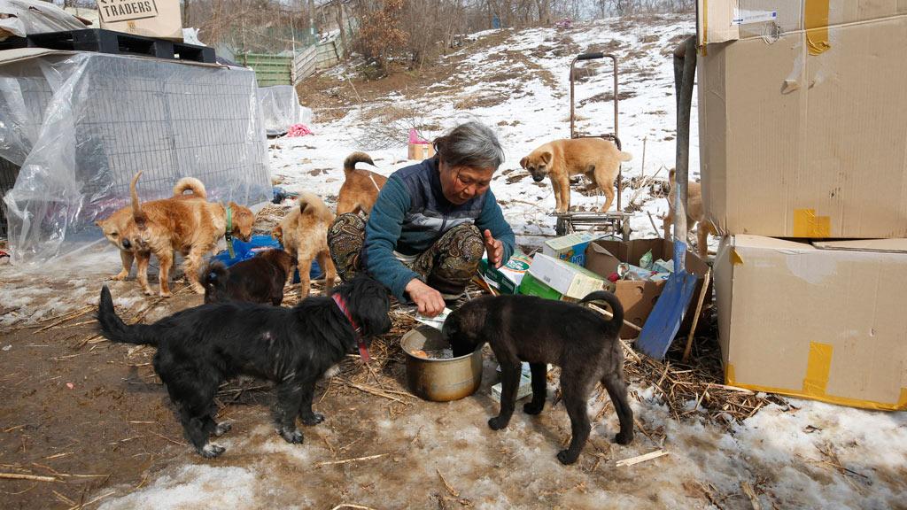 Ms Sook feeding her pet dogs. (AAP)