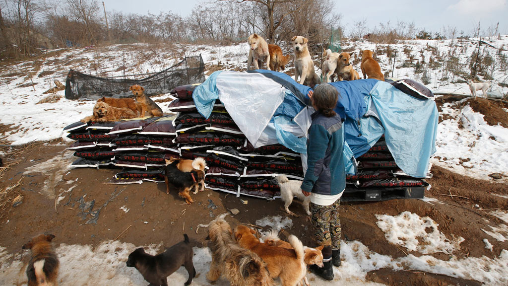 Ms Sook's shelter is located in the South Korean town of Asan. (AAP)