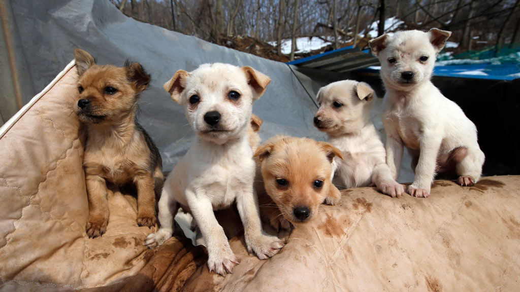 Two hundred dogs currently reside at Jung Myoung Sook's shelter. (AAP)