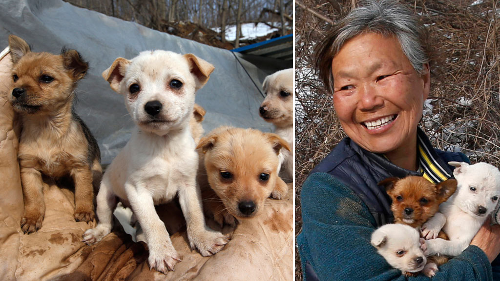 Korean woman 'lives only' for her 200 pet dogs saved from the chopping block