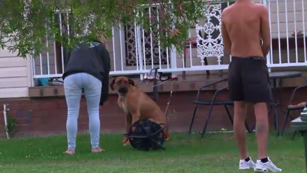 The attack occured in Pendle Hill in Sydney's west. (9NEWS)