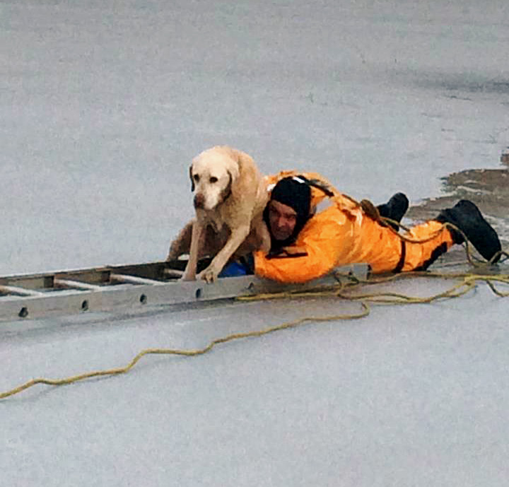 Californian emergency services rescue Labrador trapped in icy pond