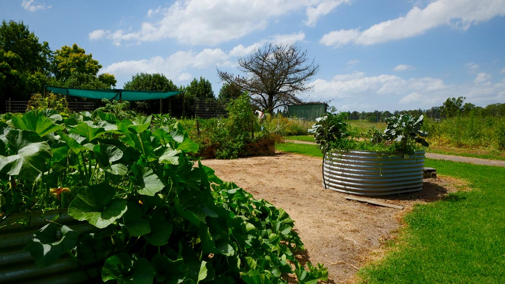 The veggie patch. (Ehsan Knopf/9NEWS)