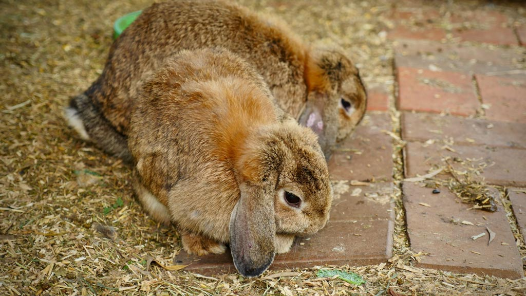 The garden hosts several farm animals, including rabbits. (Ehsan Knopf/9NEWS)
