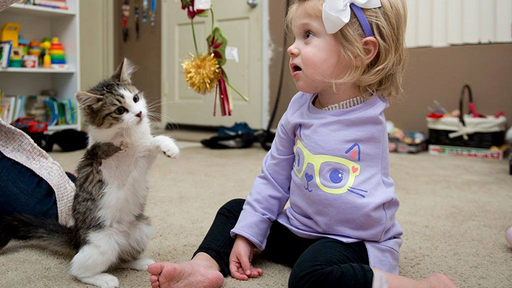 Toddler who lost arm to cancer receives three-legged kitten for Christmas