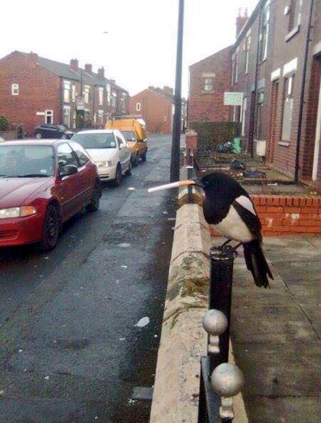Magpie with cigarette in its beak at heart of Twitter storm