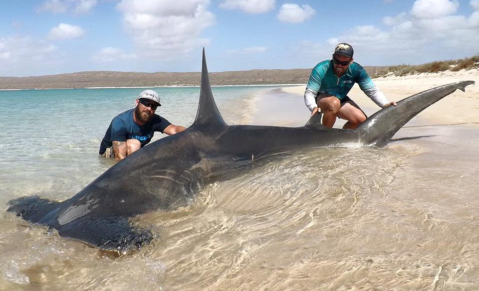 WA fishermen criticised for capture of 'monstrous' sharks