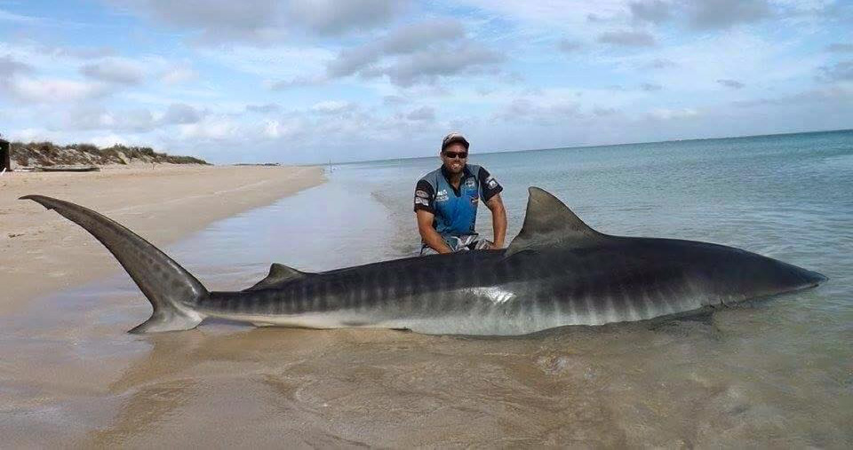 One of the fishermen with their tiger shark catch. (Facebook/Rogue Offshore)