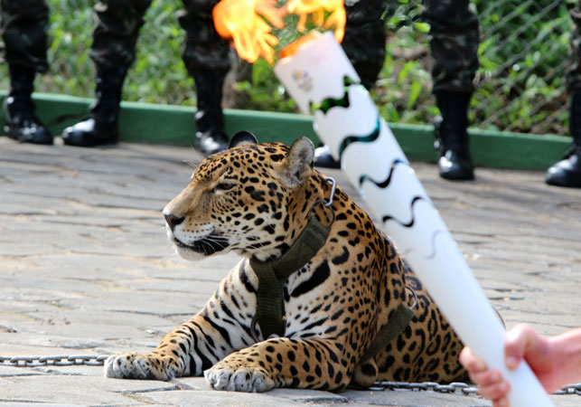 The shooting caused uproar among animal rights groups, which questioned why the animal was involved in the Olympic event. (AFP)