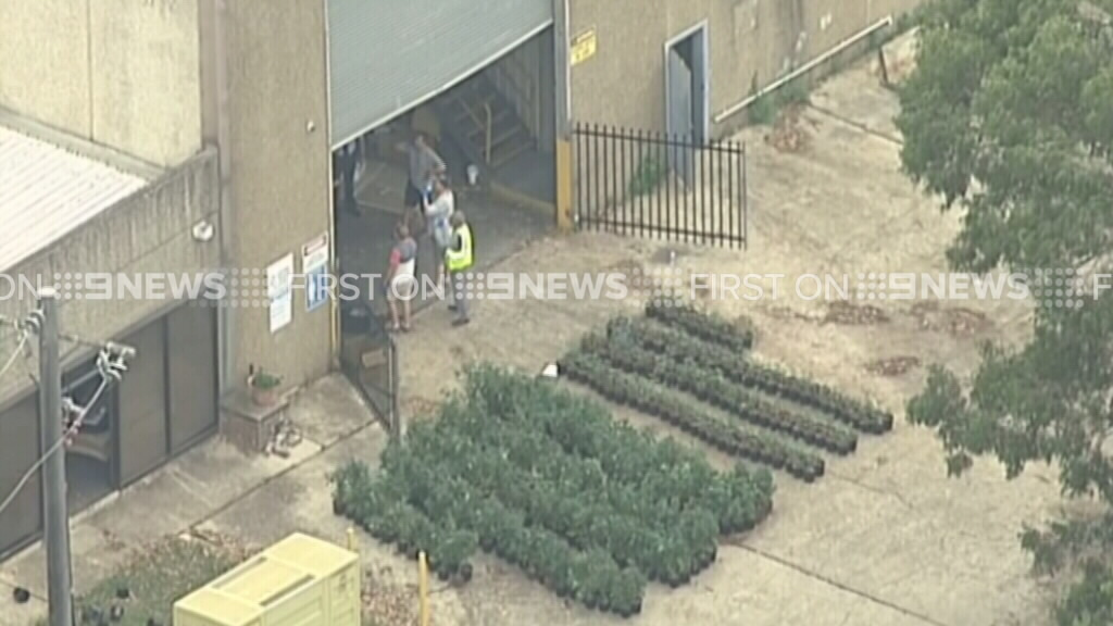 The plants were found at a commercial property. (9NEWS)