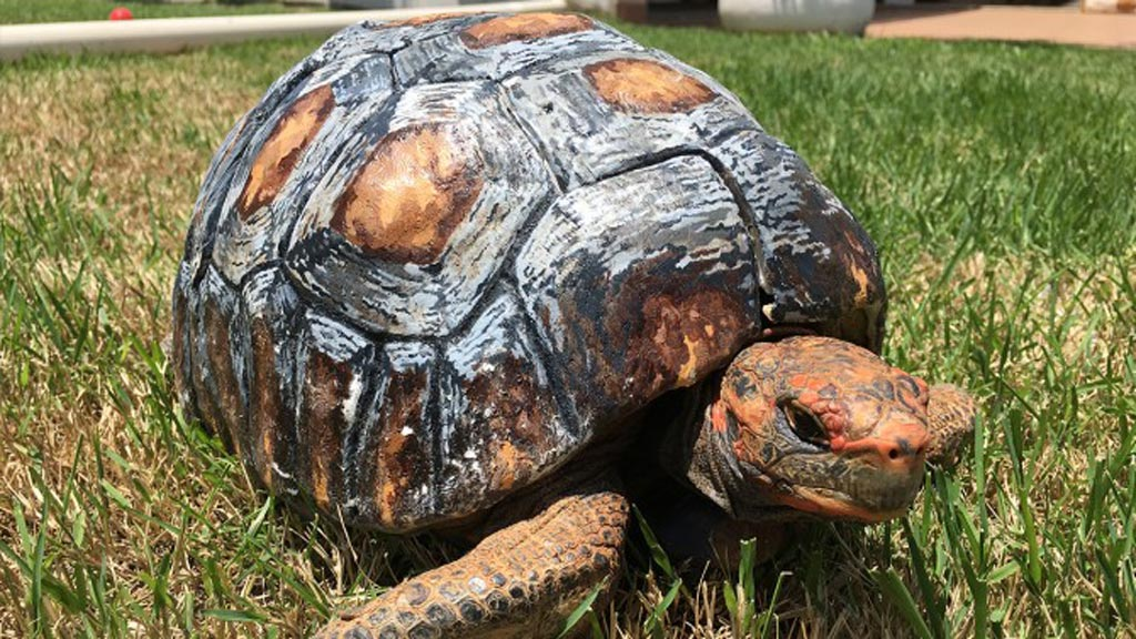 Fire-damaged Brazilian tortoise receives new 3D printed shell