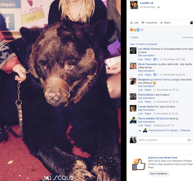 Photos of the bear posted to the French nightclub's Facebook page were a lightning rod for anger. Source: Facebook