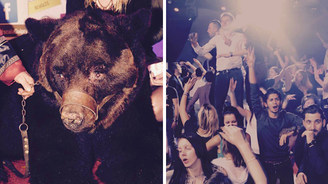 Muzzled bear shows up at French disco in 'shameful' club promotion