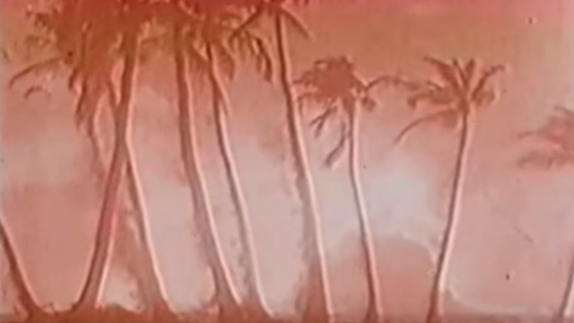 Palm trees on Bikini Atoll about to be vaporised by Castle Bravo blast.  (YouTube).