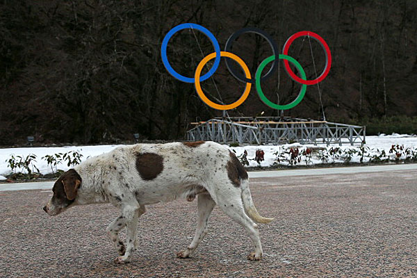 Dog at Sochi Olympic area