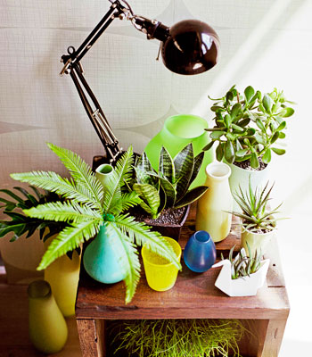 Indoor Plants Can Be Cool 9homes