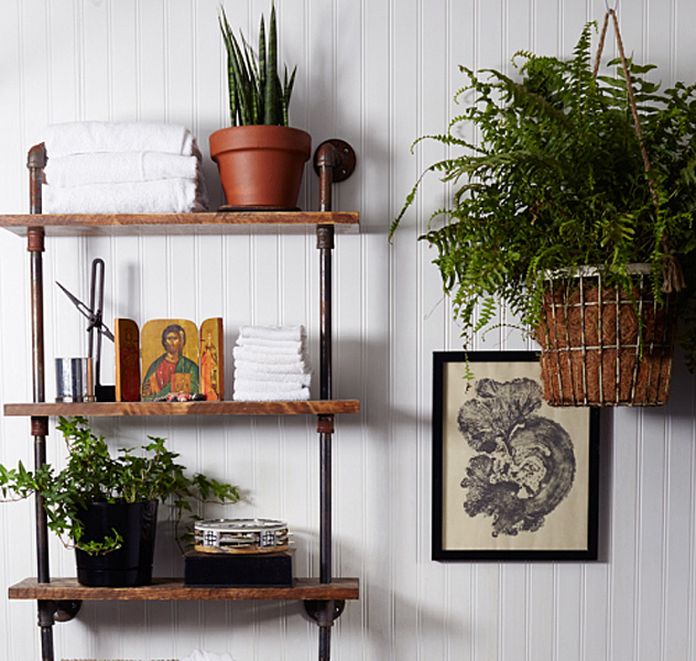 Indoor Plants That Won T Meet Their Death In Your Bathroom