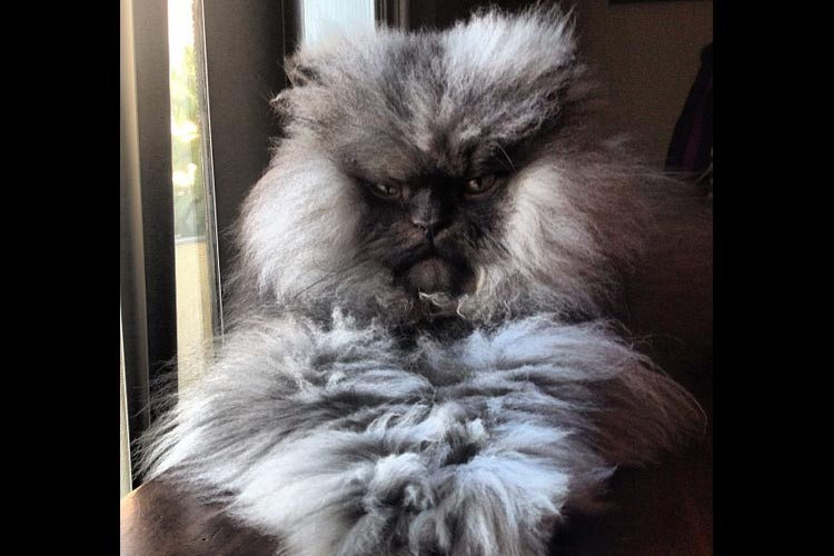 Not only is he very hairy, he's very grumpy