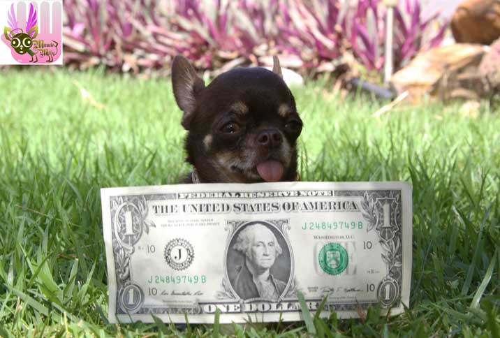 Milly might be smaller than a dollar bill, but she's pricelessly cute.