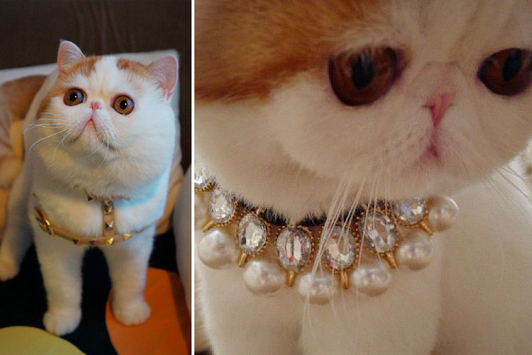 She made her internet debut wearing high-end fashion ensembles.