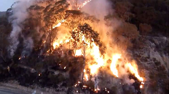 Blue Mountains fire victims who lost homes forced to pay to clear burnt trees