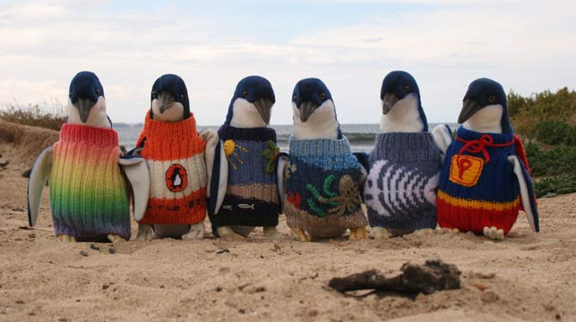 'Thanks, but please no more jumpers' says Penguin Foundation