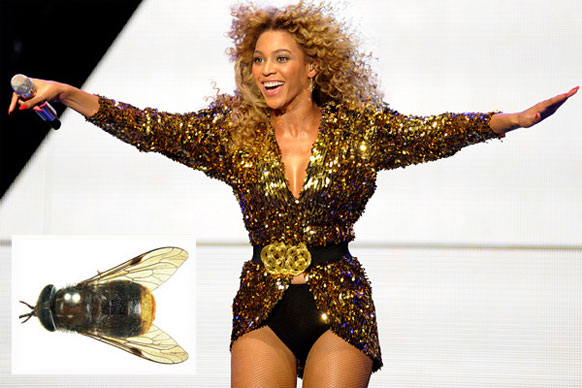"Scaptica beyonceae is a species of horse fly named after the singer Beyonce. Australian scientists say they chose the name because the fly's ""spectacular gold colour"" makes it the ""all time diva of flies."""