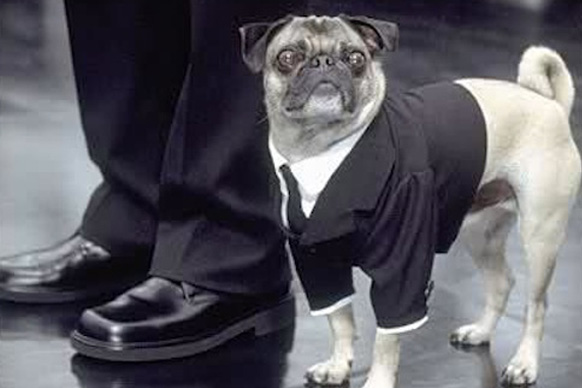 Frank the talking and singing pug holds his own against Will Smith and Tommy Lee Jones in <i>Men in Black</i> 1 and 2. He makes a cameo in <i>Men in Black 3</i> on a poster in Will Smith's room, and on a Coney Island billboard.