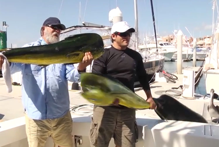 <b>We've all heard about the one that got away, but this is ridiculous.</b><br/><br/>A fisherman in Mexico has made worldwide headlines after losing his catch in spectacular fashion. The man was posing for a photograph with a monster mahi mahi when, in the blink of an eye, a sea lion jumped from the water and stole his trophy.<br/><br/>The extraordinary video is being compared to fishing's other great losses, when fish and animals bite back. Check these out...
