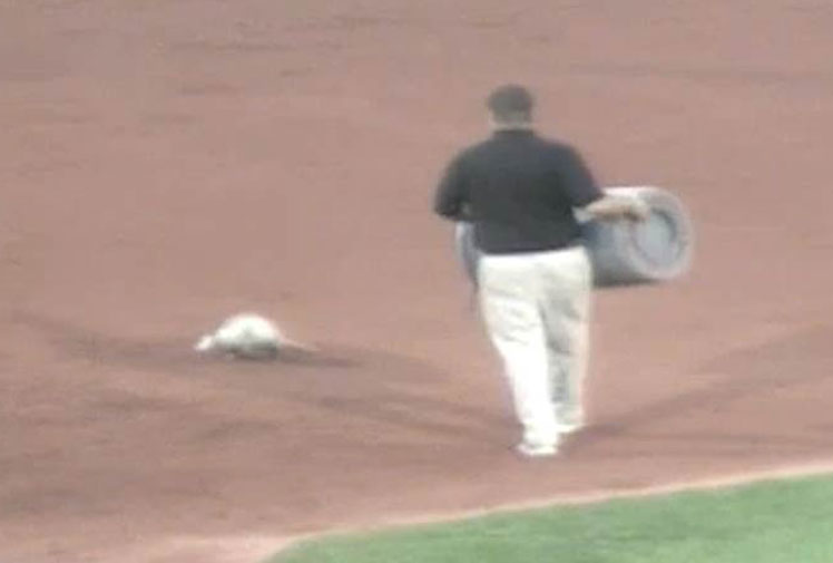 <b>America's favourite past-time took a backseat to a sporting fanatic of a different kind when an opossum rambled onto the pitch during a Minor League Baseball game.</b><br/><br/>The creature took centre stage when it halted a Quad Cities River Bandits and Clinton Lumberjacks showdown, wandering between bases before being caught and dumped into a garbage bin.  <br/><br/>Its day got even worse as the home side, the Bandits, lost a close game 6-5.<br/><br/>Click through to see some of sport's other headline-grabbing game-crashers.<br/><br/><br/>