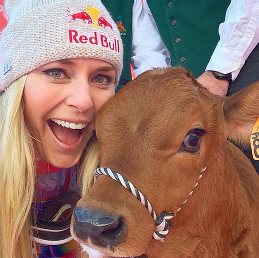 <b>What do you get when you win your 61st ski World Cup win? Why, a cow of course!</b><br/><br/>US downhill specialist Lindsey Vonn was at her very best when she claimed her latest success with a time of 1min 44.47 sec at Val D'Isere in France.<br/><br/>The girlfriend of Tiger Woods was then presented with a calf to commemorate her win.<br/><br/>The bovine certainly made an impression on Vonn, the 30-year-old taking snap after snap with her four-legged prize.<br/>