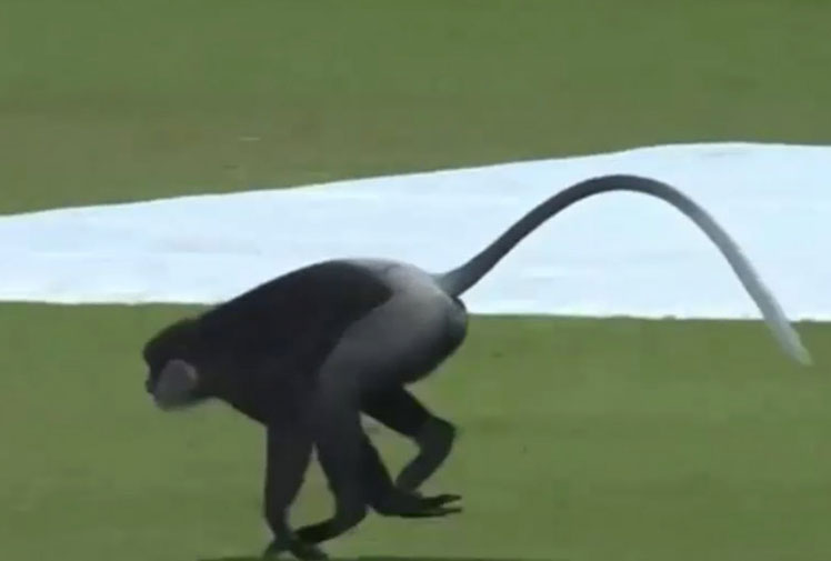 <b>The First Test between Sri Lanka and India in Galle has been halted briefly by a pitch invader – with a difference. </b><br/><br/>With Sri Lanka at 263-6, a monkey made its way onto the seaside ground - with the Indian team keeping a safe distance - before the primate trotted off and allowed play to resume.<br/><br/>Click through to check out one of the more welcome pitch invaders in recent times and some of sport's most beloved animals, including the Anfield cat.  <br/>