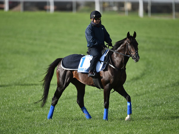 Fame Game firms further for Melbourne Cup